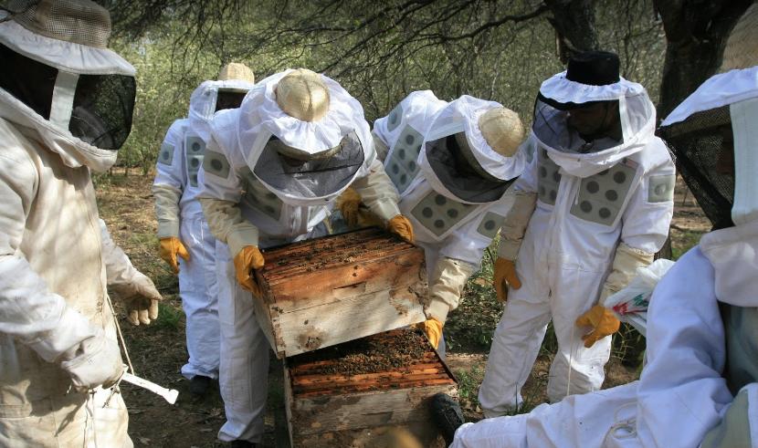 Un miel commerce équitable